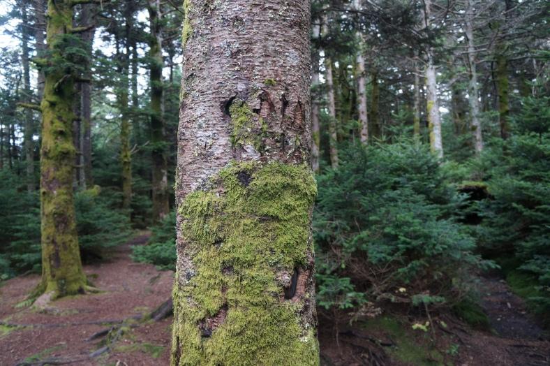 Immediately I notice bear claw marks on the tree next door.