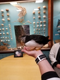 Toti, the mascot puffin from the Aquarium in the Westman Islands.