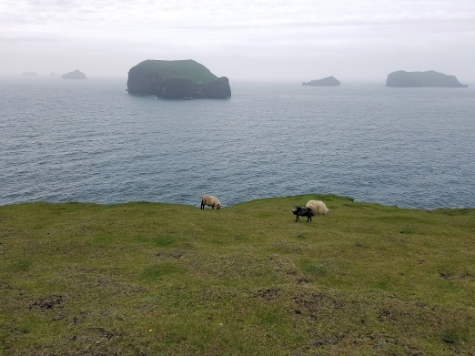 Exploring the smaller island, we found ourselves with a lot of sheep ;)