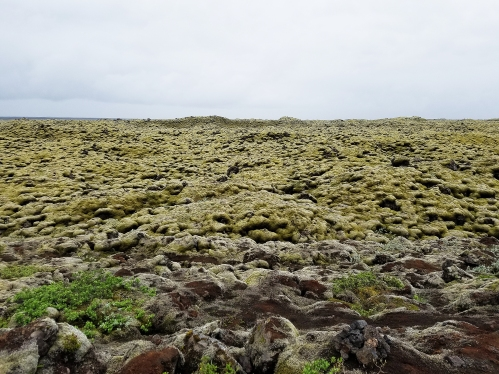 The mossy lava fields of Iceland. Apparently the eruption that caused these lava fields almost led to a complete abandonment of Iceland in the 18th century.