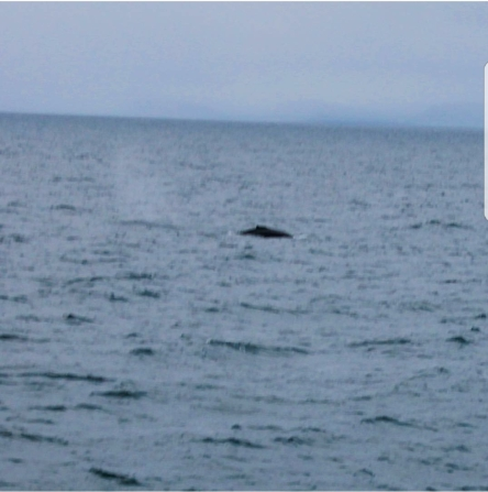 The one shot we got of a whale from the tour outside Reykjavik